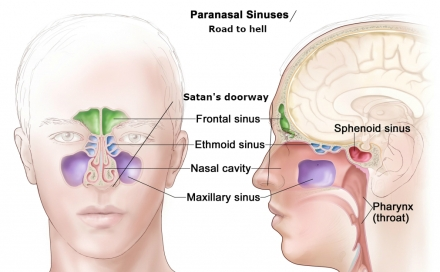 anatomy-of-nose-and-sinuses-nose-and-sinus-anatomy-human-anatomy-diagram-1